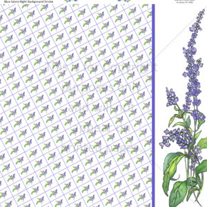 blue salvia scrapbook paper