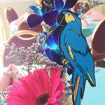 Parrot Party Pick