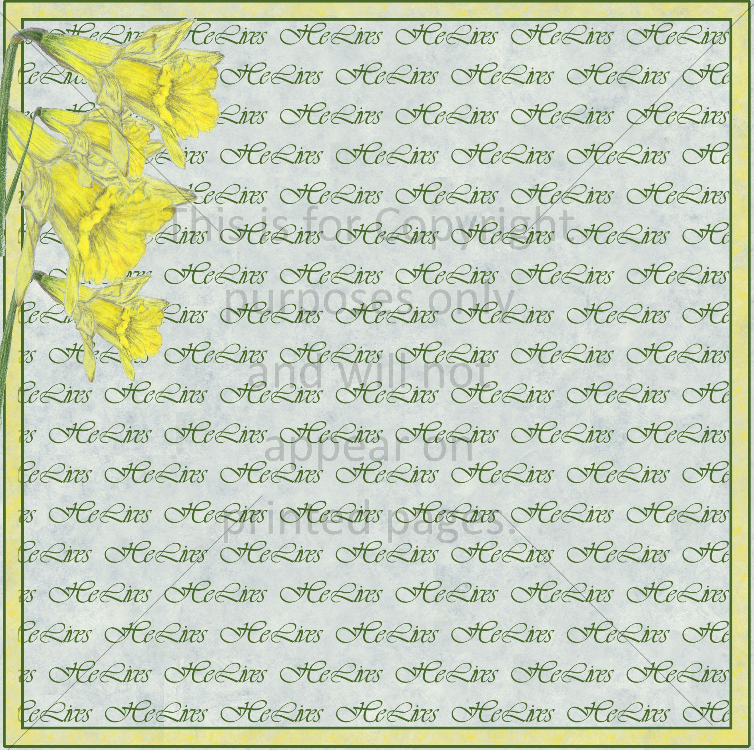 Daffodil Border He Lives Left Smh Illustration Design