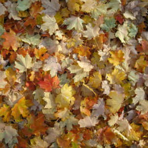 fall leaves scrapbook paper