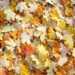 Autumn, Fall, Harvest Scrapbook Paper