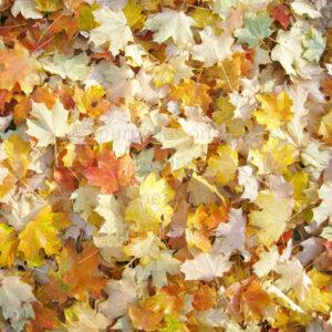 fall leaves scrapbook paper