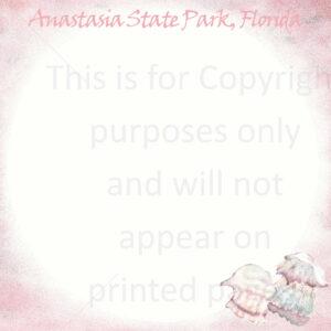 Anastasia State Park Scrapbook Paper