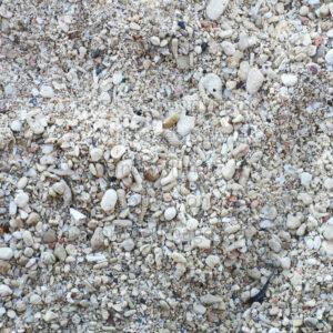 Sea Shells Scrapbook Paper at Montego Bay