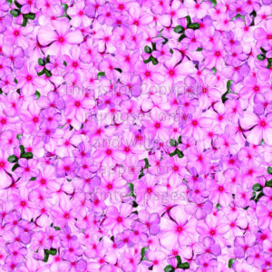 Impatiens from St Augustine Lighthouse Scrapbook Paper