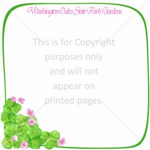 Washington Oaks State Park Scrapbook Paper