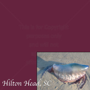 Hilton Head Scrapbook Paper