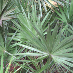 Palm Branch Scrapbook Paper