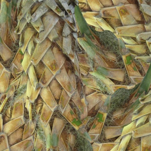 Palm Tree Scrapbook Paper