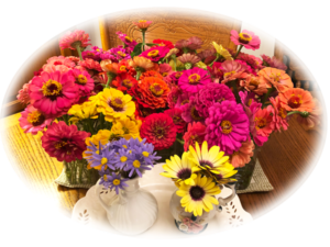 bouquets of zinnias