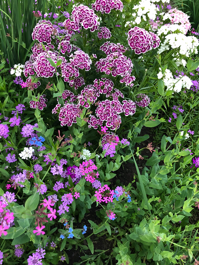 flowers in the gardens